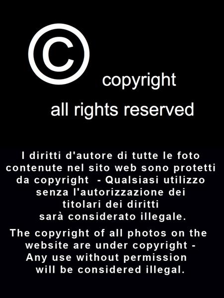 FFF_copyright_2_1_web